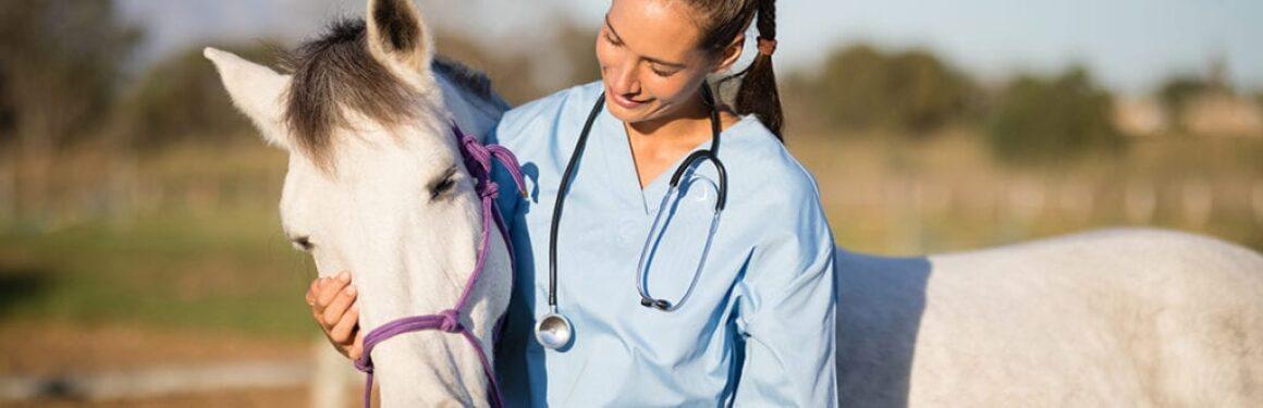 animal-health-1160x375
